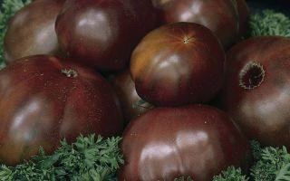 Черные томаты (50 фото): какие лучшие сорта помидор, какое название, русский, ананас, гроздь, слон, крым, описание, отзывы, видео – тепличные советы