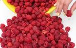 О малине бабье лето ремонтантной: описание сорта, особенности по уходу
