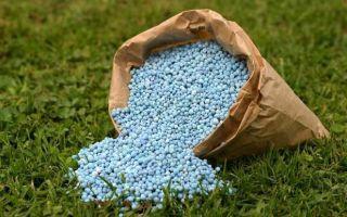 Весенняя подкормка смородины: обработка азотсодержащими удобрениями