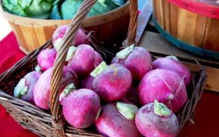 Когда сажать брюкву семенами в открытый грунт, как вырастить плоды