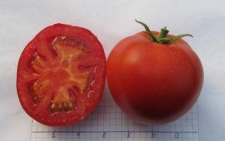 Жонглер: описание сорта томата, характеристики помидоров, посев