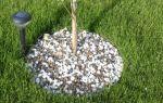 О вишне колоновидной: описание сортов для подмосковья, посадка, уход