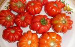 Грибное лукошко: описание сорта томата, характеристики помидоров, посев