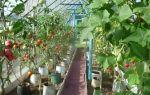 Огурцы в ведре: выращивание, посадка, уход, фото, видео — тепличные советы