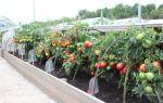 Парники для помидоров своими руками (25 фото): построить, сделать, опоры, покрыть теплицу, должна быть, возраст, рассады томатов – тепличные советы