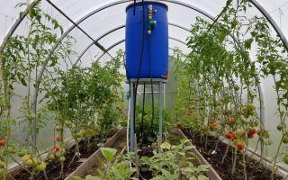 Мульчирование томатов в теплице: как и чем мульчировать помидоры, фото, видео – тепличные советы