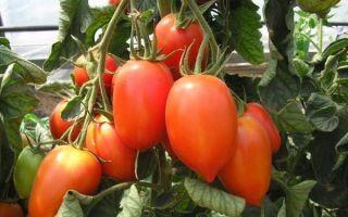 Томат сливка: описание красных, желтых, сладких сортов, отзывы, фото помидоров, видео — тепличные советы