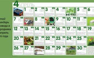 Выращивание и уход за огурцами в теплице: советы ганичкиной, фото, видео – тепличные советы