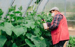 Об огурцах дружная семейка: описание сорта, посадка, уход, выращивание