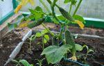 Выращивание роз в теплице: бизнес-план, рентабельность, преимущества, фото, видео – тепличные советы