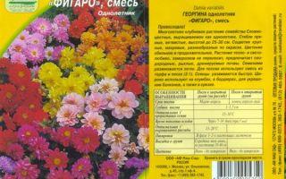 Георгины фигаро: отзывы, фото, выращивание из семян, видео — тепличные советы