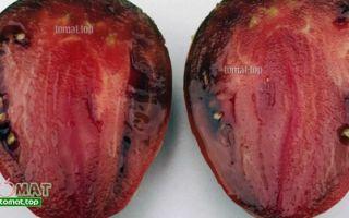 О томате черный: описание лучших сортов, характеристики помидоров, посев