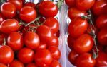 Ранние сорта томатов для открытого грунта, ультраскороспелые и сверхранние
