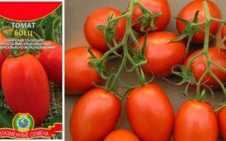 Лучшие низкорослые сорта помидоров для открытого грунта и теплиц, ранние томаты