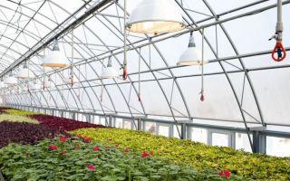 Светодиодные лампы для растений: как сделать своими руками, схема для теплицы, фото, видео – тепличные советы