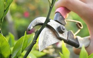 Голубика в сибири: описание лучших сортов, посадка, выращивание, уход