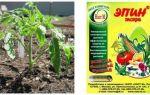 Об обработанных семенах огурцов: можно ли замачивать их перед посадкой