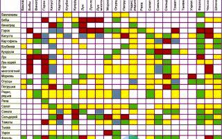 Совместимость растений: смешанные посадки, таблица совместимости овощей на грядке, в теплице, фото, видео – тепличные советы