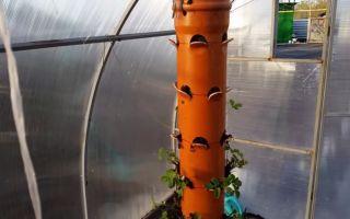 Выращивание клубники в трубах пвх, мешках, бочках: преимущества, технология, фото, видео – тепличные советы