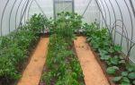 Что выращивать в теплице из поликарбоната: разновидности культур, как и когда сажать, фото, видео – тепличные советы