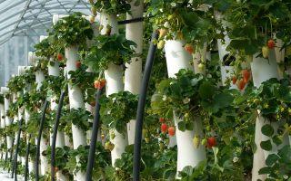 Вертикальная грядка для клубники: как сделать своими руками, технология выращивания вертикальным способом, фото, видео – тепличные советы