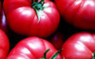 О томате корнеевский: описание сорта, характеристики помидоров, посев