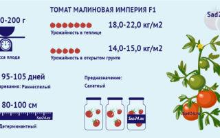 О томате империя (малиновая, русская): описание и характеристики, посадка и уход