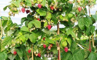Что посадить после тыквы на следующий год: можно ли сеять клубнику и огурцы