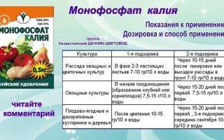 Монофосфат калия: применение для томатов, дозировка подкормки, фото, видео – тепличные советы
