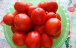 Томат земляк (50 фото): кто сажал помидоры, характеристика и описание сорта, отзывы, видео – тепличные советы