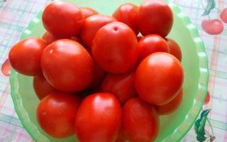 Томат земляк (50 фото): кто сажал помидоры, характеристика и описание сорта, отзывы, видео — тепличные советы