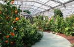 Оранжерея апельсин: как сделать своими руками, этапы строительства, характеристика, фото, видео — тепличные советы