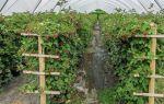 Лучшие томаты для теплицы в подмосковье: какие лучше сажать, как выбирать, фото, видео – тепличные советы