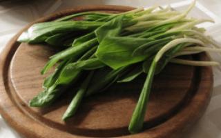Является ли колба черемшой сибирской: все о растении, как правильно называть