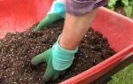 Почва для клубники и земляники: закрытый грунт, открытый грунт, удобрения, фото, видео – тепличные советы