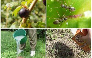 Удобрения для помидоров в открытом грунте: какое лучше для рассады, во время цветения, фосфорные, применение магбора, фото, видео – тепличные советы