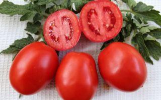 Земляк: описание сорта томата, характеристики помидоров, посев