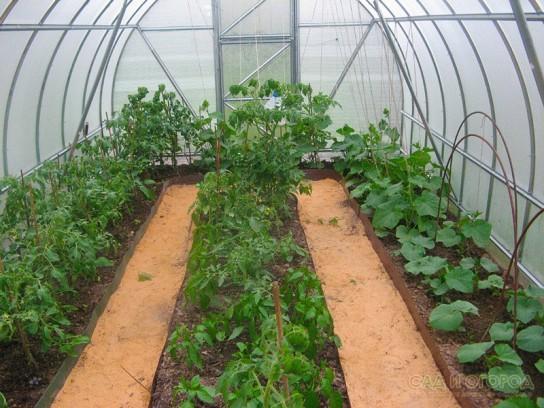 Как получить хороший урожай в теплице и открытом грунте