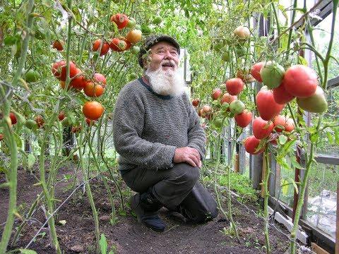 Виноград в теплице технология выращивания своими руками подробная инструкция и советы схемы посадки