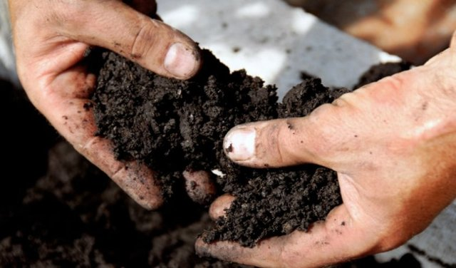 Выращивание и посадка картофеля в ящиках и деревянных коробах, советы