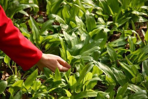 Все о выращивании лука джусай : посев и уход за растением, условия для роста