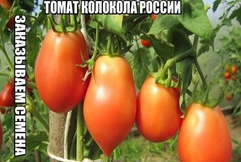 Все о томате Колокола России: агротехника, характеристики и описание сорта