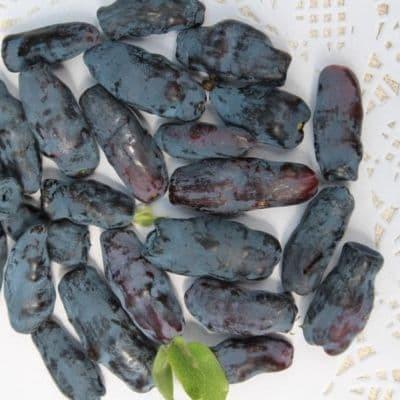 Жимолость съедобная Сильгинка: описание и характеристики камчатского сорта