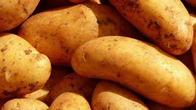 О картофеле Лидер: описание семенного сорта картофеля, характеристики, агротехника