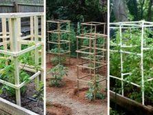 Подвязка кустов смородины: особенности укрепления весной и для зимы