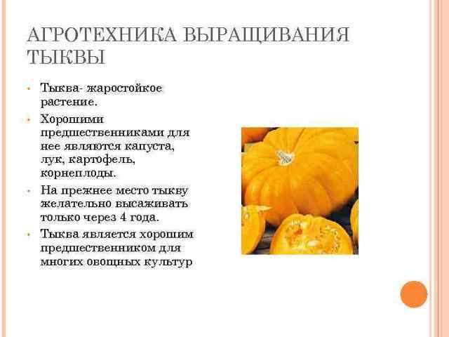 Все о тыкве Крошка (медовая): описание сорта, агротехника выращивания