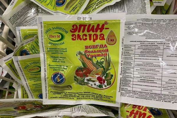 Посадка петрушки на рассаду в домашних условиях: правила выращивания
