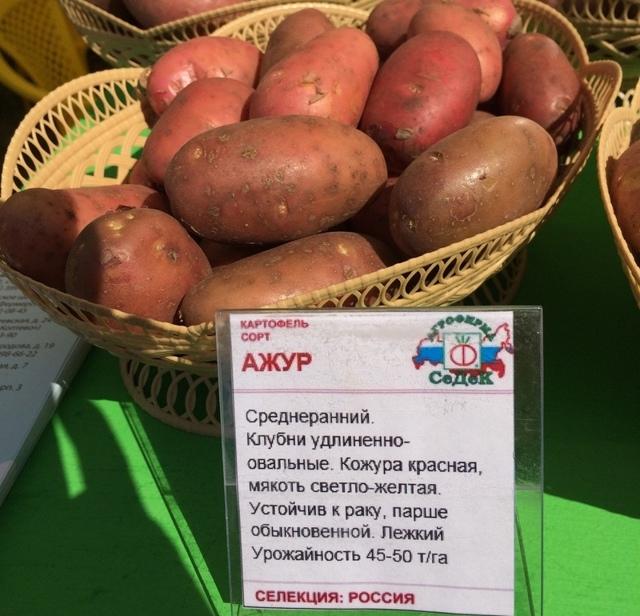 Ажур: описание семенного сорта картофеля, характеристики, агротехника