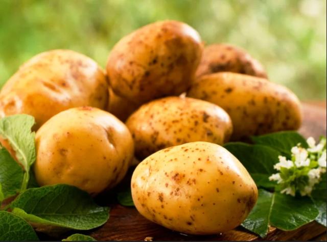 На какой день и когда всходит картофель после посадки, советы