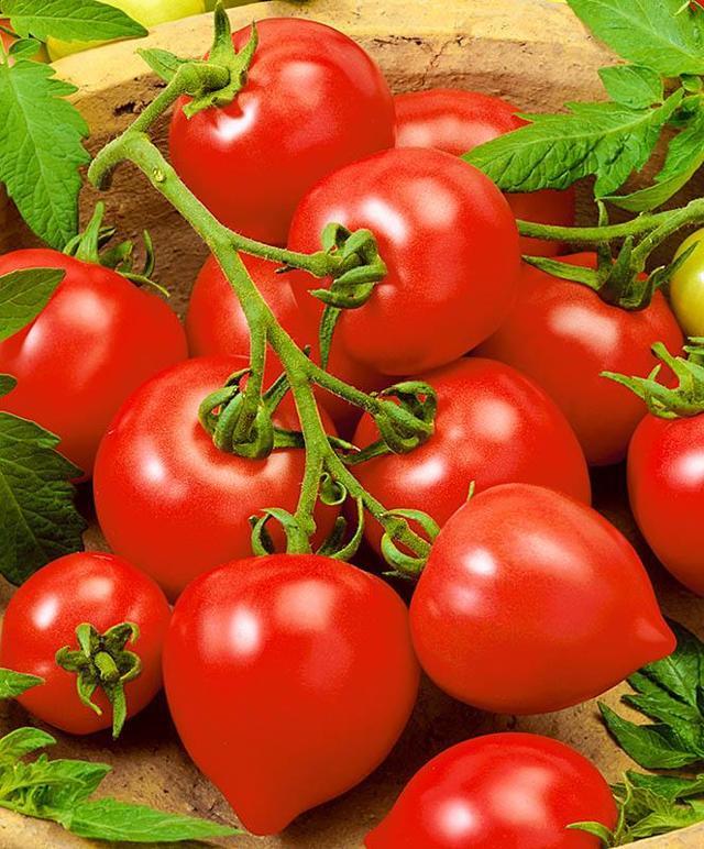 О томате Слот: правила посадки, выращивания, ухода, размножения